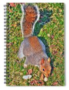 08 Grey Squirrel Sciurus Carolinensis Series Spiral Notebook