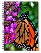 007 Making Things New Via The Butterfly Series Spiral Notebook