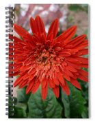 A Beautiful Red Flower Growing At Home Spiral Notebook
