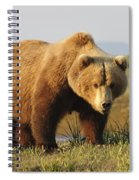 A Brown Grizzly Bear Ursus Arctos Spiral Notebook