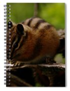 A Little Chipmunk Spiral Notebook