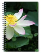 A Pink Tipped White Lotus Spiral Notebook