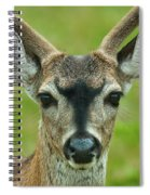 All Ears Spiral Notebook