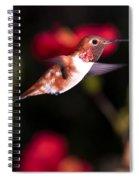 Allen's Hummingbird Spiral Notebook