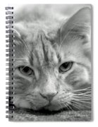 Arthur Spiral Notebook