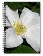 Artic White Spiral Notebook
