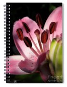 Asiatic Lily Named Vermeer Spiral Notebook