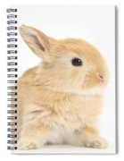 Baby Lop Rabbit Spiral Notebook