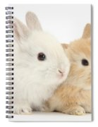 Baby Lop Rabbits Spiral Notebook