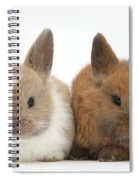 Baby Rabbits Spiral Notebook