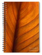 Backlit Leaf Spiral Notebook
