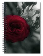 Red Rose Beauty Spiral Notebook