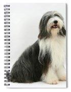 Bearded Collie Spiral Notebook