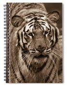 Bengal Tiger On The Prowl Spiral Notebook