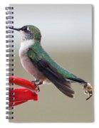 Birds And Bee's Spiral Notebook