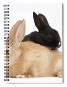 Black And Sandy Rabbits Spiral Notebook