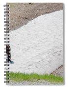 Black Bear Spiral Notebook