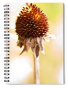 Black-eyed Susan After The Winter Spiral Notebook