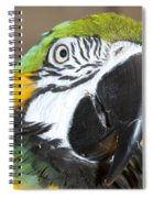 Blue And Gold Macaw Spiral Notebook