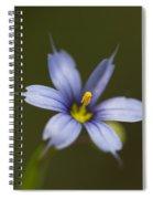 Blue-eyed Grass Wildflower - Sisyrinchium Angustifolium Spiral Notebook