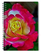 Blushing Rose Spiral Notebook