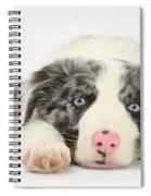 Border Collie Pup Spiral Notebook