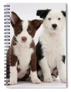 Border Collie Puppies Spiral Notebook