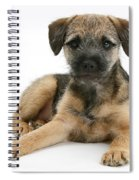 Border Terrier Puppy Spiral Notebook