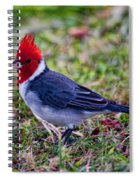 Brazillian Red-capped Cardinal Spiral Notebook
