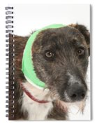 Brindle Lurcher Wearing A Bandage Spiral Notebook