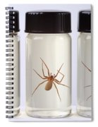 Brown Recluse Spider Spiral Notebook