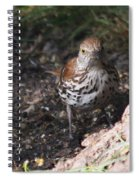 Brown Thrasher Spiral Notebook