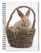 Bunny In A Basket Spiral Notebook