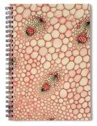 Butchers Broom Stem Spiral Notebook