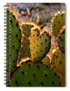 Cactus Heart In Sunset Spiral Notebook