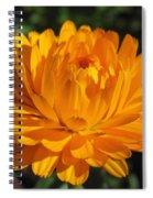 Calendula Named Bon-bon Orange Spiral Notebook