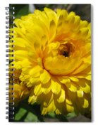 Calendula Named Bon-bon Yellow Spiral Notebook
