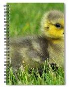 Canada Gosling Spiral Notebook