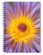 Cape Blue Waterlily Nymphaea Capensis Spiral Notebook