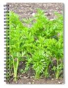Carrot Crop Spiral Notebook