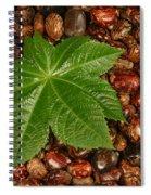 Castor Bean Leaf And Seeds Spiral Notebook