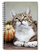 Cat And Pumpkins Spiral Notebook