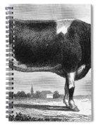 Cattle, 19th Century Spiral Notebook