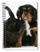 Cavalier King Charles Spaniel And Rabbit Spiral Notebook