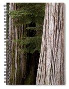 Cedar Trees, Whistler, British Columbia Spiral Notebook