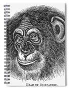 Chimpanzee Spiral Notebook