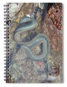 Clam Worm Spiral Notebook