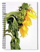Close Up Of Sunflower. Spiral Notebook