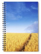 Co Carlow, Ireland Barley Spiral Notebook