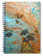 Collare Butterflyfish Spiral Notebook